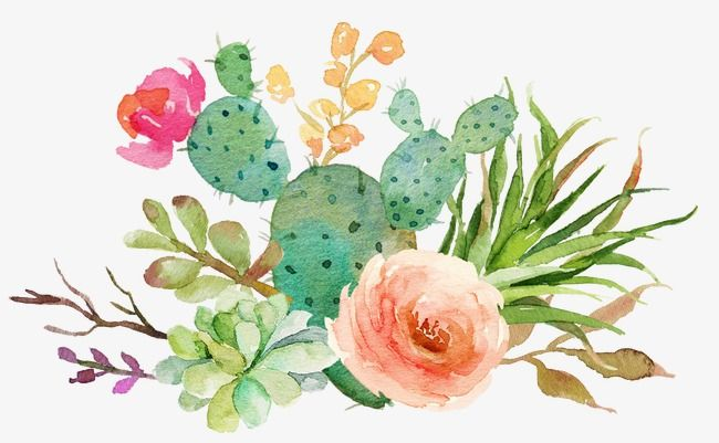 Fleshy Cactus Flowers, Green Cactus Bloom, Pink Flowers PNG.