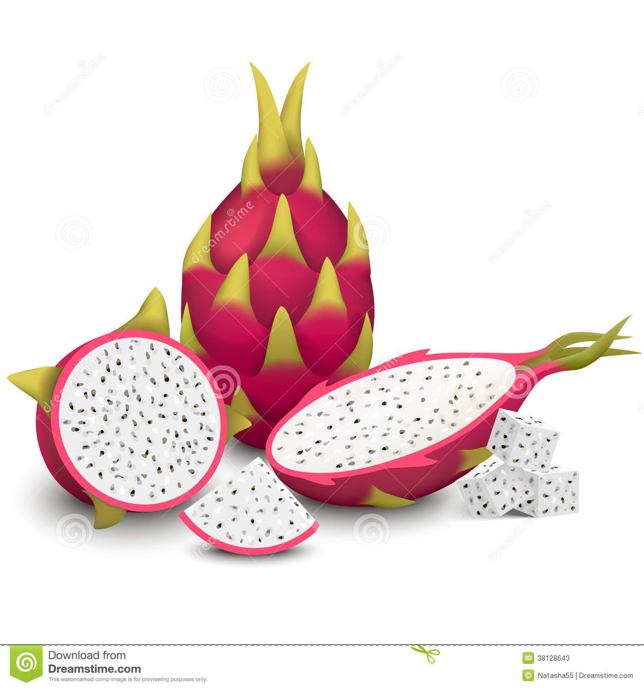 Dragon Fruit Vector Illustration Stock Photos.