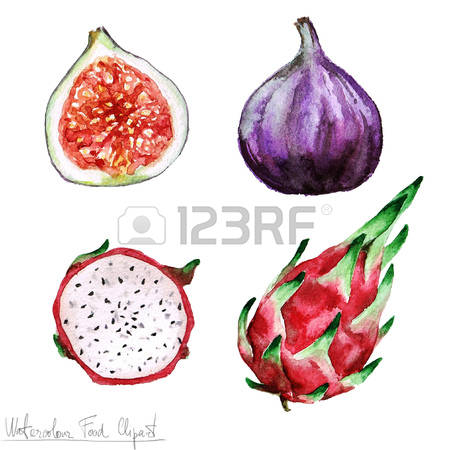 1,741 Cactus Fruit Stock Vector Illustration And Royalty Free.