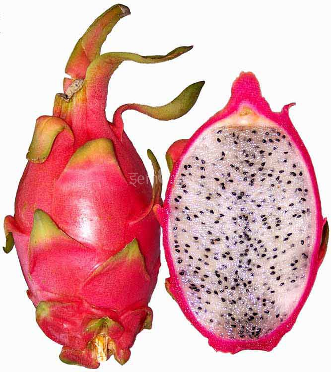 Exotic Fruit Images.