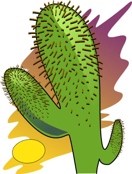 Cactus Pictures For Kids.