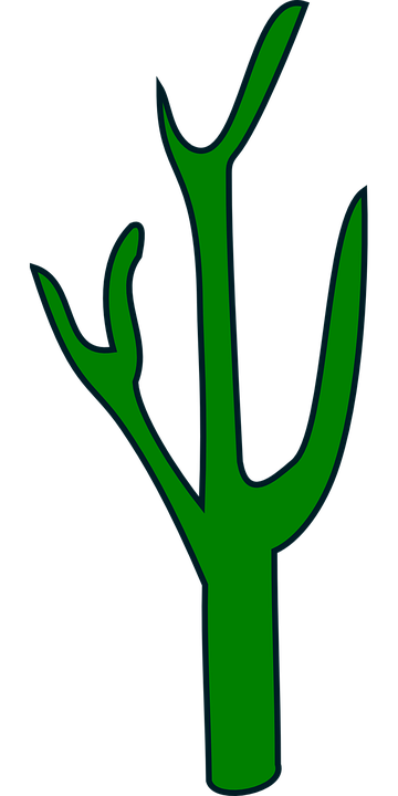 Free vector graphic: Cactus, Green, Plant, Cacti.