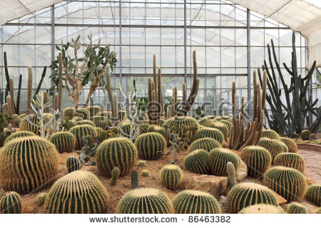 Cactus Greenhouse Stock Photos, Royalty.