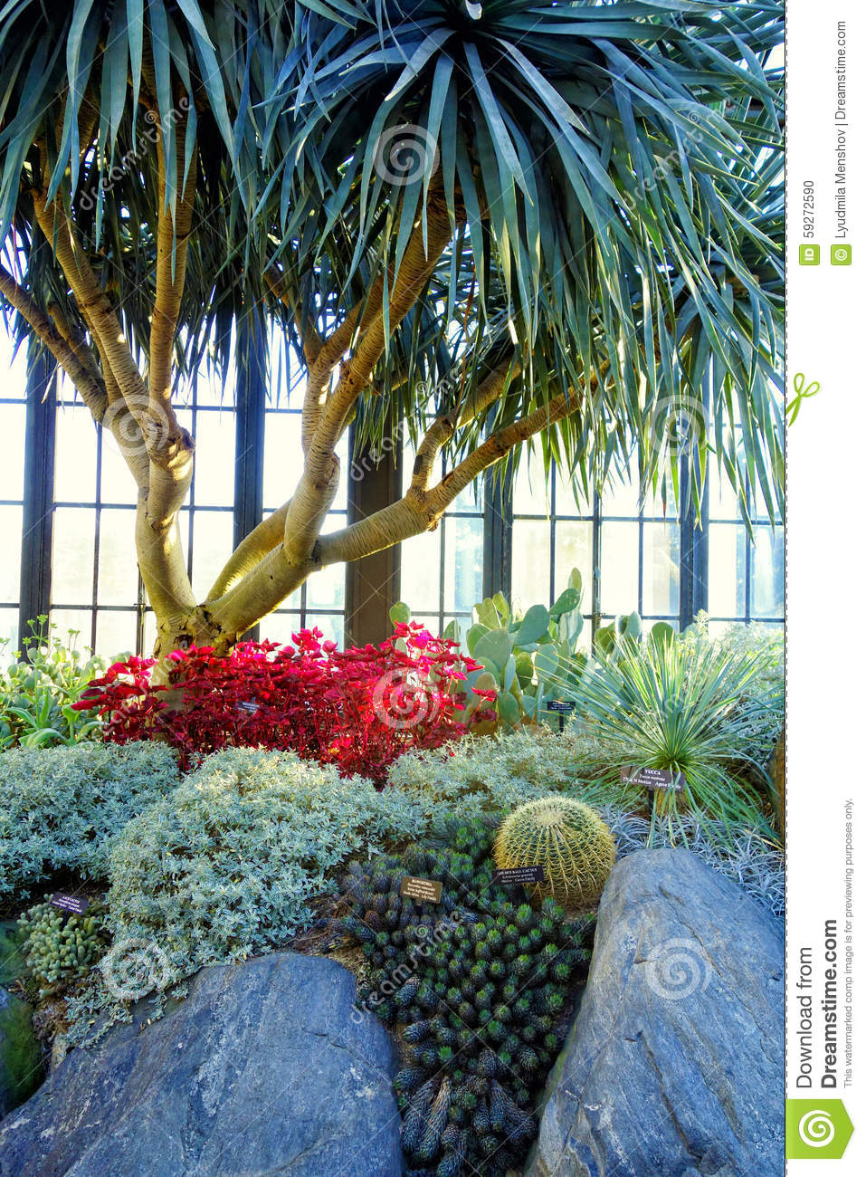 Composition With Cactus In The Greenhouse Stock Photo.