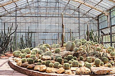 Cactus Greenhouse Stock Photo.