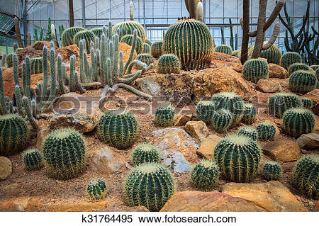 Stock Image of cactus plant in green house use for multipurpose.