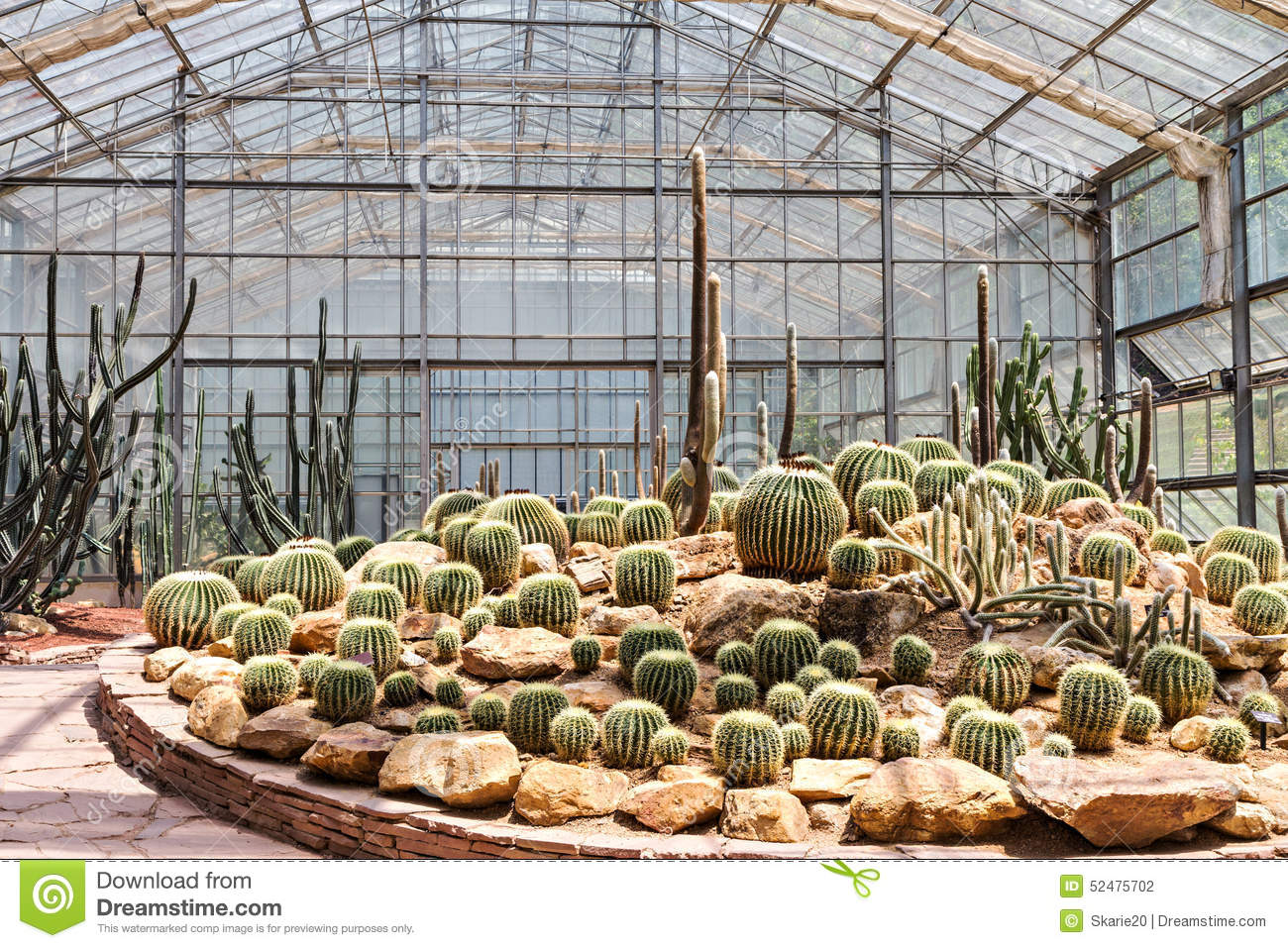 Cactus In The Greenhouse Stock Photo.