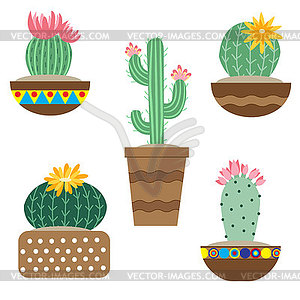 Cactus flower in pots for flowers and plants. Brigh.