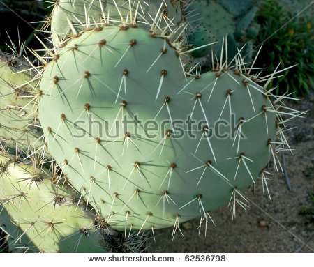 Cactus Needles Stock Photos, Royalty.