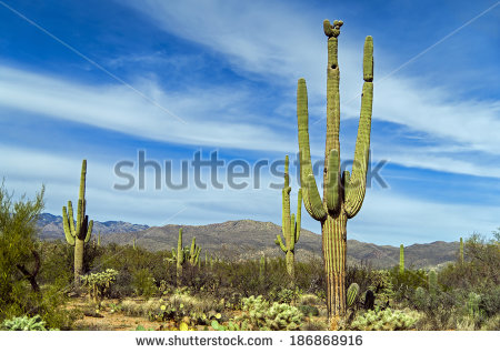 New Mexico Landscape Stock Photos, Royalty.