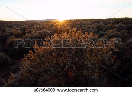 Stock Photograph of sage cactus and heart sunset taos new mexico.