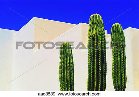 Stock Photograph of Cactus and adobe architecture in Taos, New.