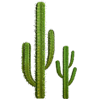 Download Cactus Free PNG photo images and clipart.
