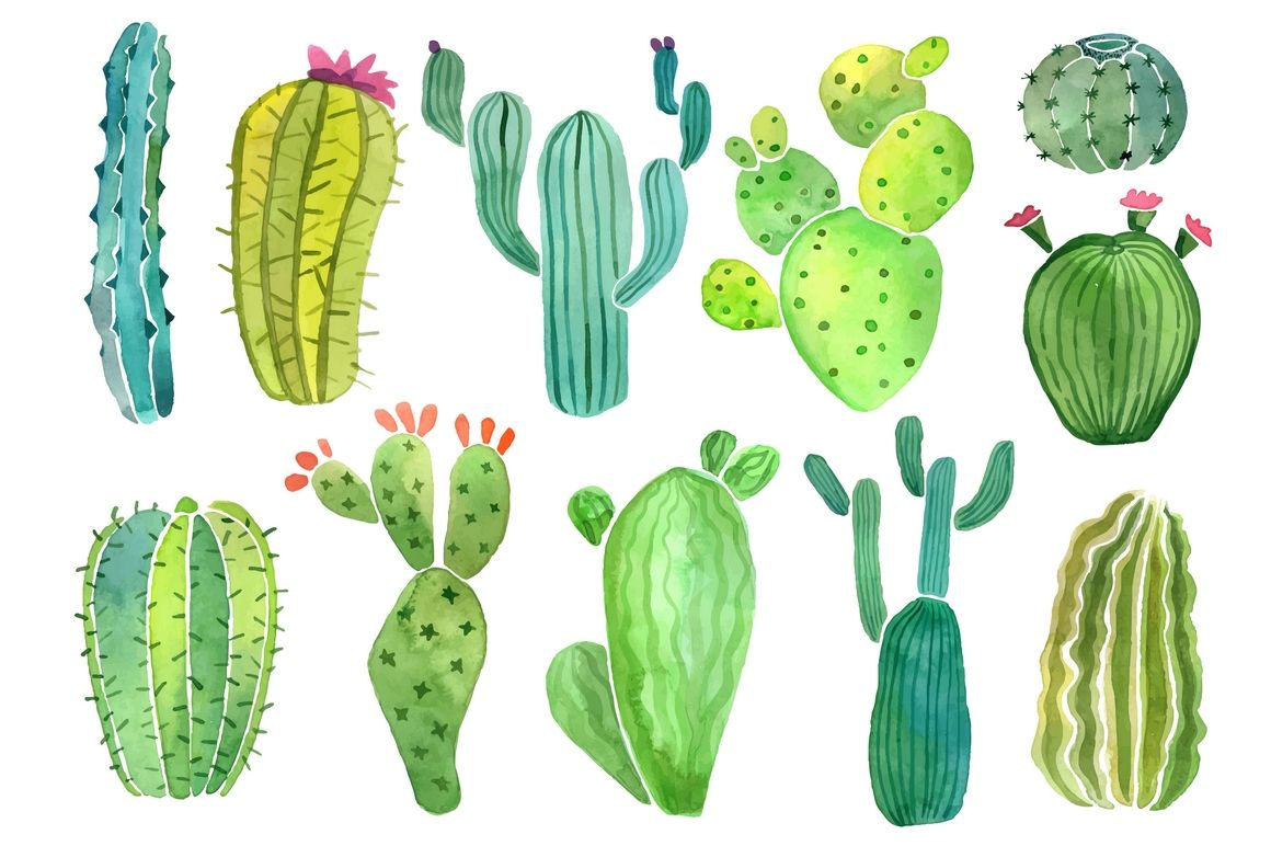 Watercolor cactus and succulent clipart set by Nadya Krupina.