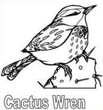 Cactus Wren Clipart.