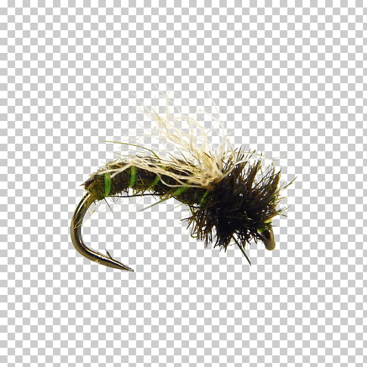 Caddisfly Fly fishing Pupa Insect Larva, Fly Tying PNG.