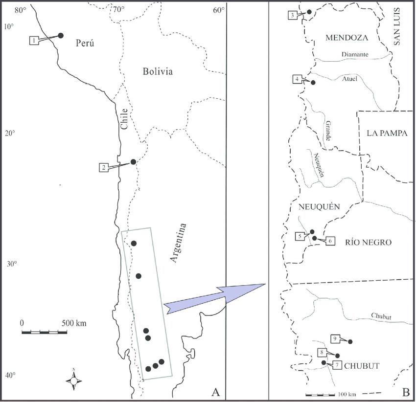 The genera Cryptaulax and Procerithium (Procerithiidae.