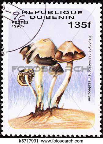 Clipart of Psilocybin Mushroom Psilocybe caerulescens var.