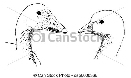 Stock Illustration of Snow and Ross Goose comparison.