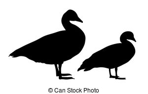 Clipart of Snow Goose.