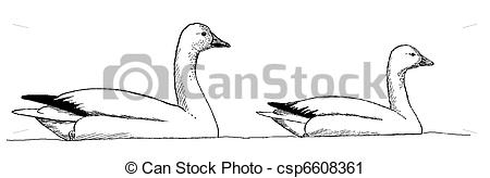 Clipart of Snow and Ross Goose comparison.