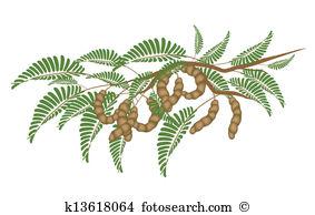 Caesalpinioideae Clipart Royalty Free. 10 caesalpinioideae clip.