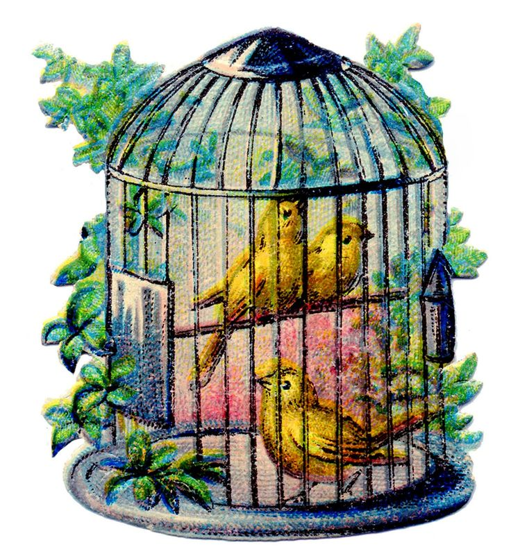 1000+ images about Bird Cage on Pinterest.