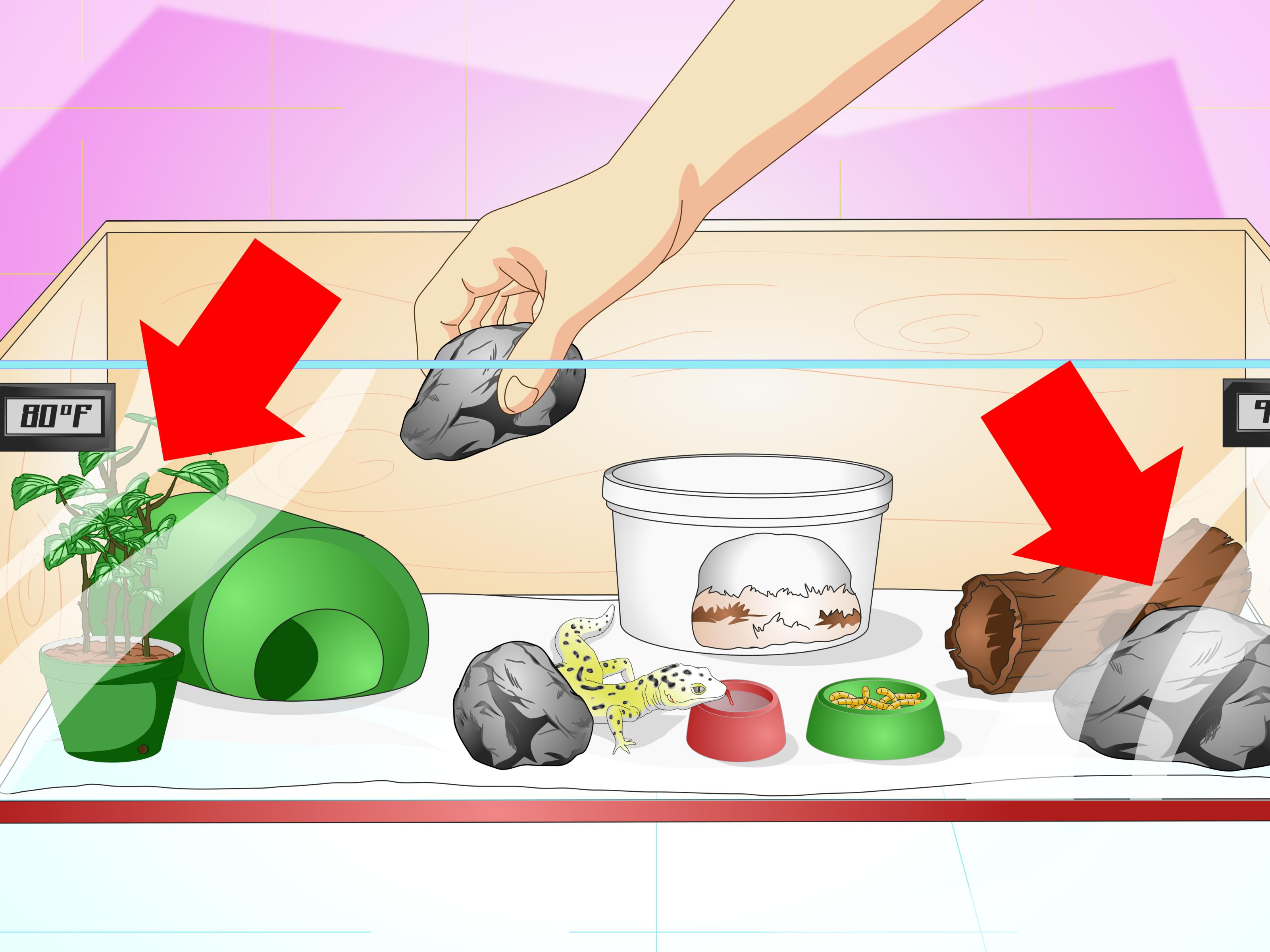 How to Create a Habitat for a Leopard Gecko: 9 Steps.