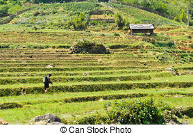 Stock Photographs of Rice Terrace mountain village in Sapa, Lao.