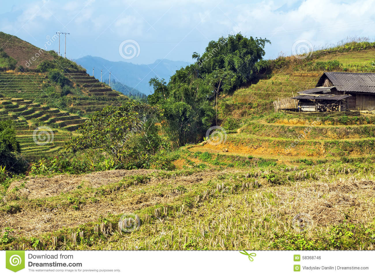 Village Agriculture Terraced Rice Field Hill Stock Photo.