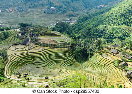Stock Photos of village agriculture farm Terraced Rice Field hill.