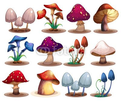 1000+ images about I ♡ Mushrooms on Pinterest.