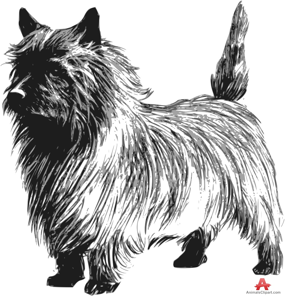 Cairn Terrier Dog Drawing Clipart.