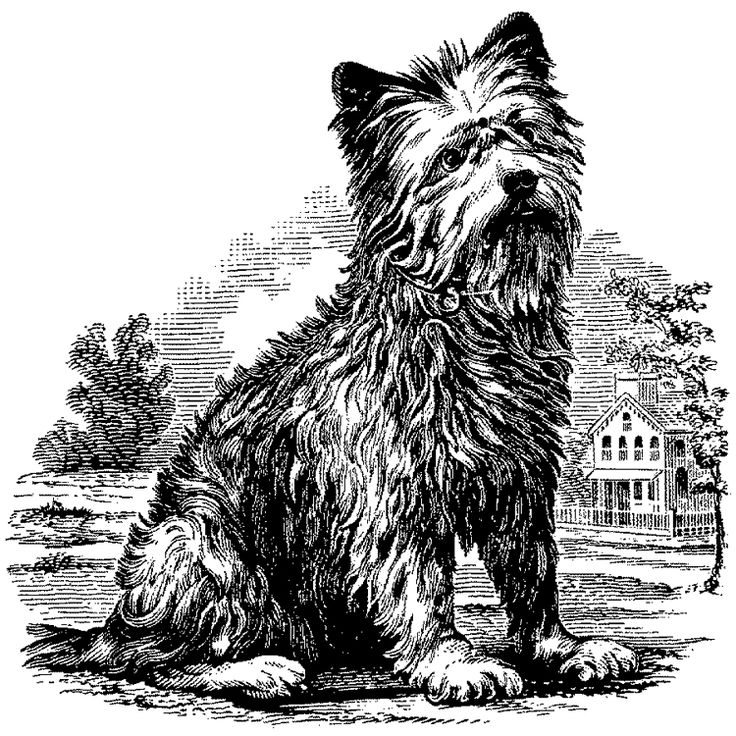 1000+ images about Scotties, Westies & the Beloved Cairn (Terriers.