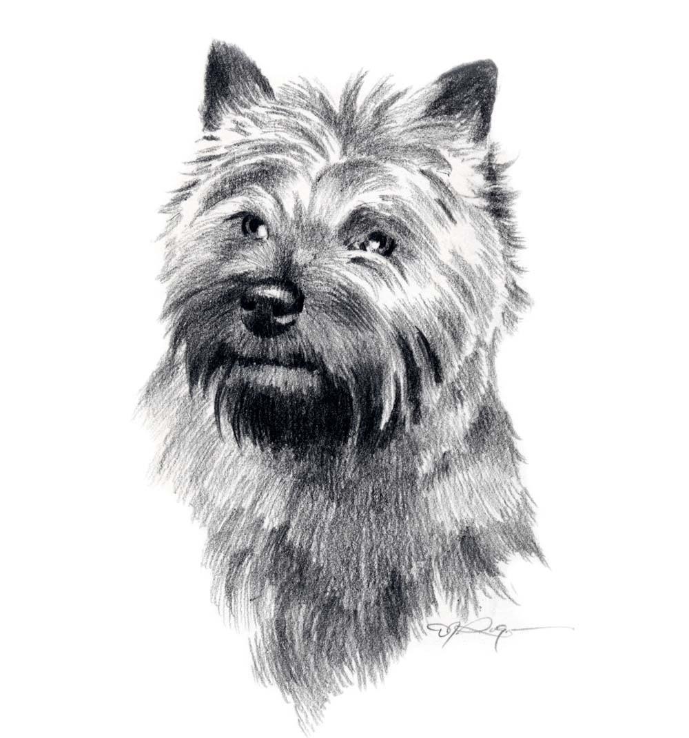 CAIRN TERRIER Dog Art Print Signed by Artist DJ Rogers by k9artgallery.