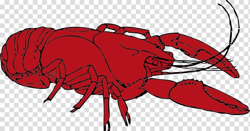Crayfish Cajun cuisine Procambarus clarkii , Crustacean transparent.