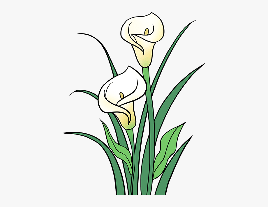 Stem Drawing Lily Flower.