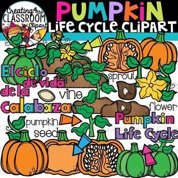 Pumpkin Life Cycle Clipart {Life Cycles Clipart}.