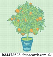 Calamondin Clip Art Illustrations. 30 calamondin clipart EPS.