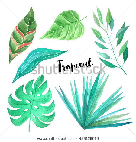 Watercolor Foliage Stock Photos, Royalty.