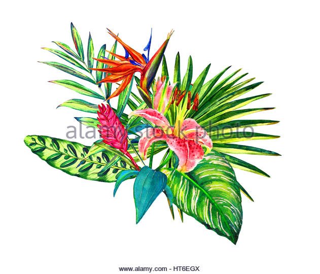 Calathea Plant Stock Photos & Calathea Plant Stock Images.