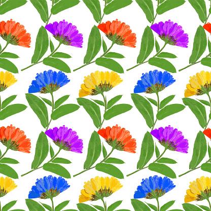 Calendula Officinalis Clip Art, Vector Images & Illustrations.