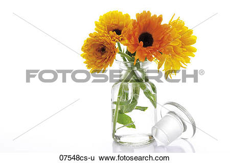 Stock Images of Marigold flowers in vase, (Calendula Officinalis.