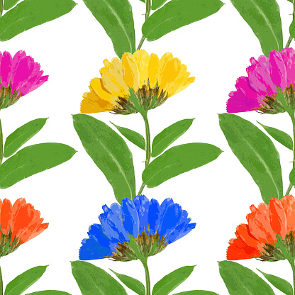Calendula Officinalis Clip Art, Vector Images & Illustrations.