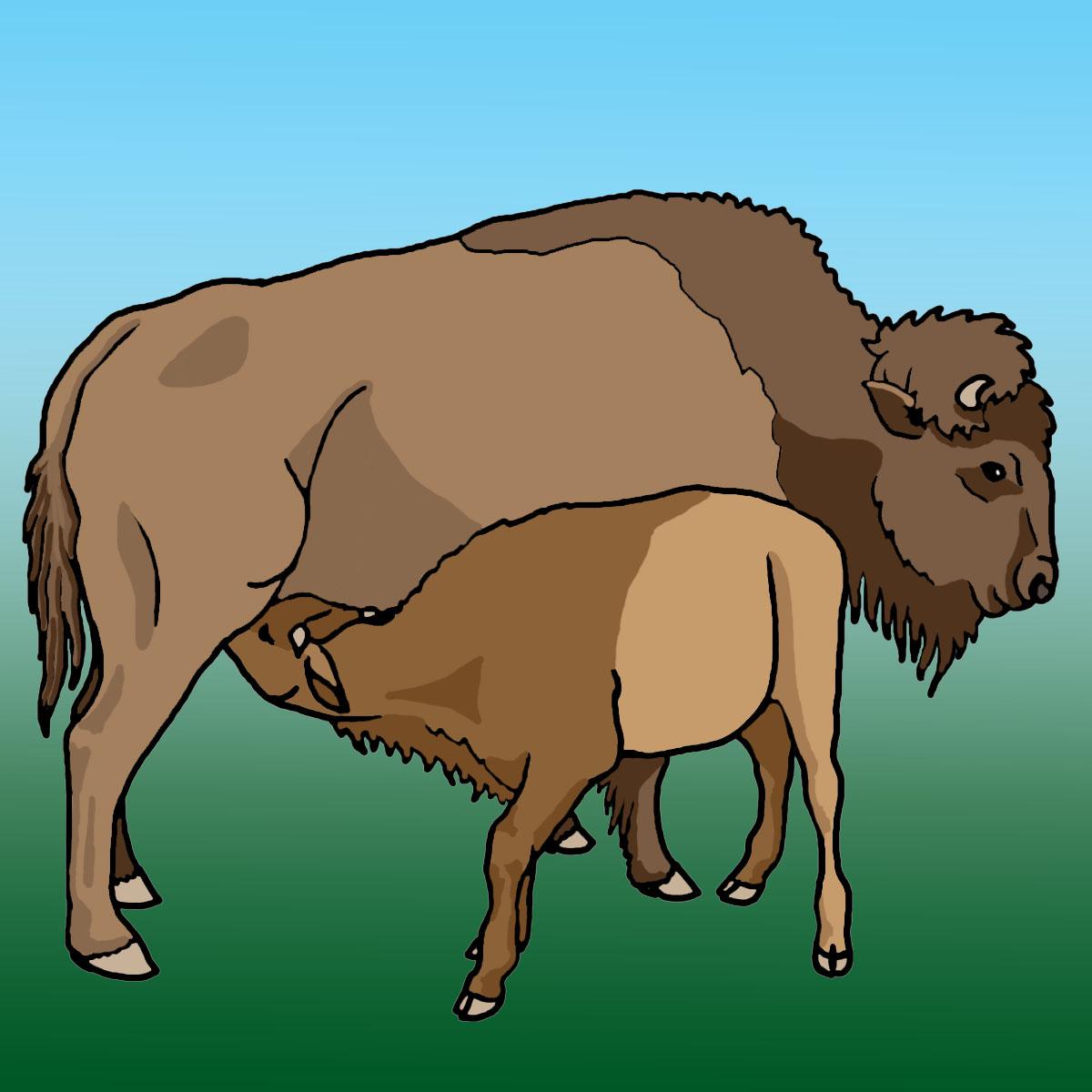 Clip art buffalo calf grayscale image #22837.