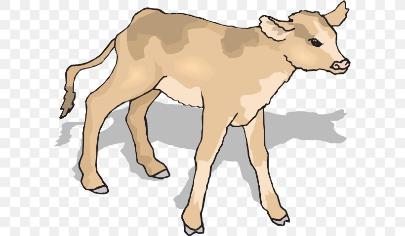 Angus Cattle Calf Clip Art, PNG, 600x479px, Angus Cattle.