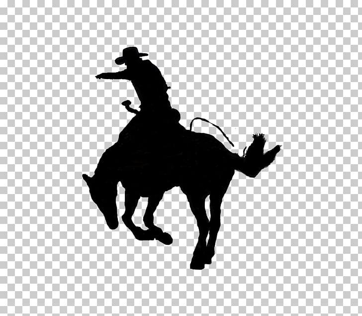 Kentucky Horse Park Calf roping Lexington Rodeo Team roping.
