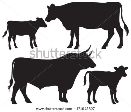 Calf Stock Photos, Royalty.