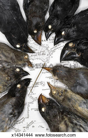 Stock Photo of Darwin's finch specimens on map of Galapagos.