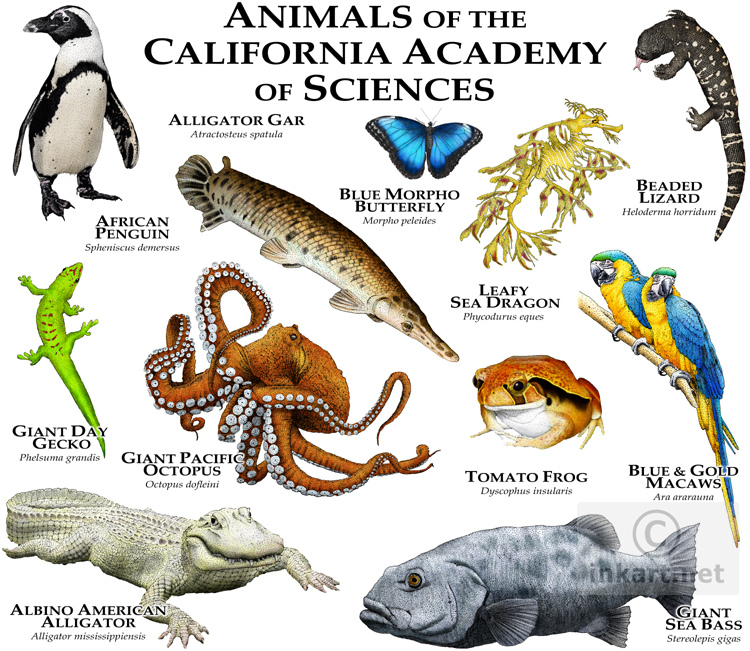 Animals of the California Academy of Sciences.